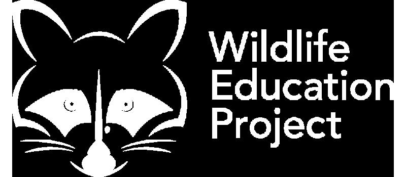 Indy Web Design